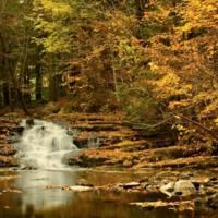 Vaughan Woods in Autumn.